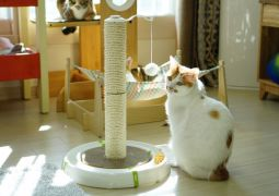 고양이장난감 아리아퍼니쳐에서 만나봐요