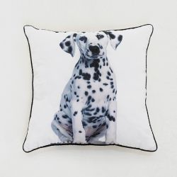 SH01-1010  Cushion